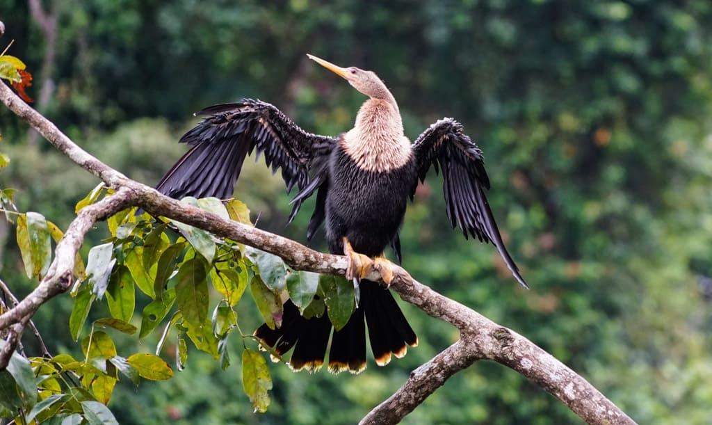Costa Rica Wildlife - Intrepid Escape