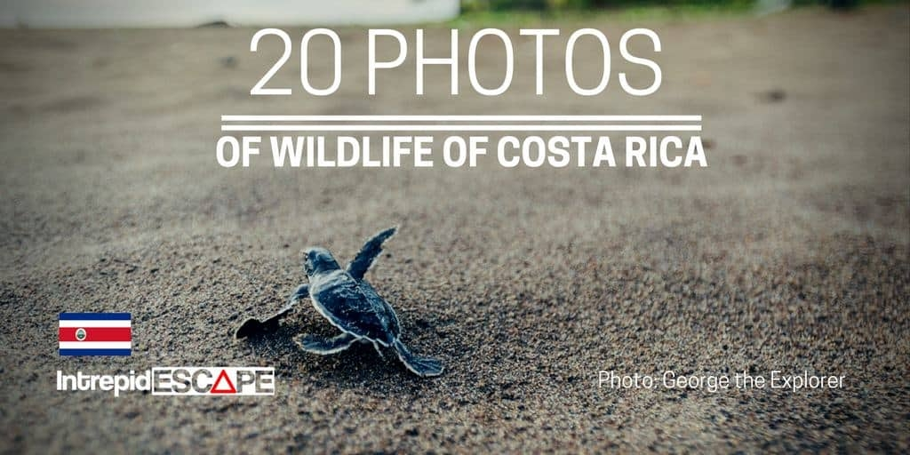 Wildlife photos Costa Rica