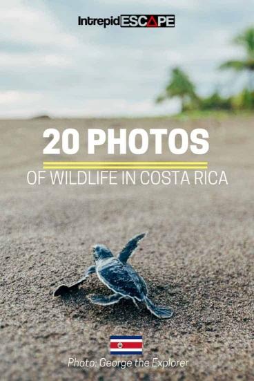 20 photos of Wildlife in Costa Rica