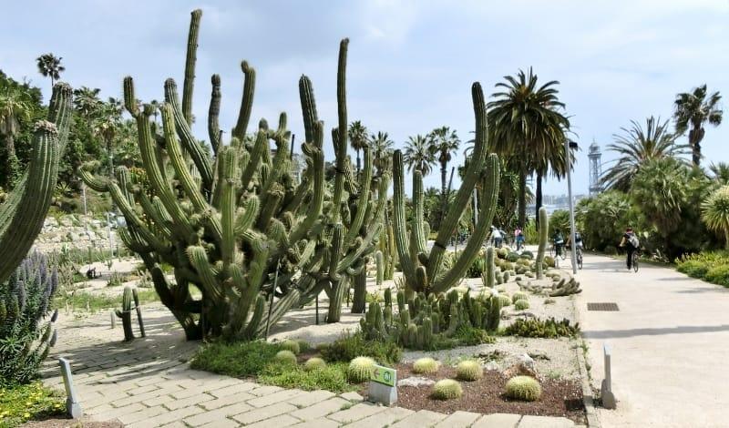 Montjuïc Cactus Park