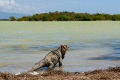 Dominican Republic Travel Trips: 5 hidden gems