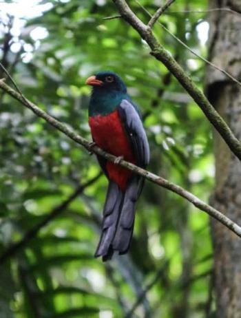 Gamboa Rainforest - Intrepid Escape