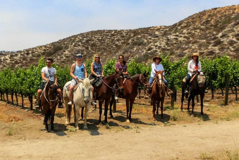 Temecula Horse Wine Tour
