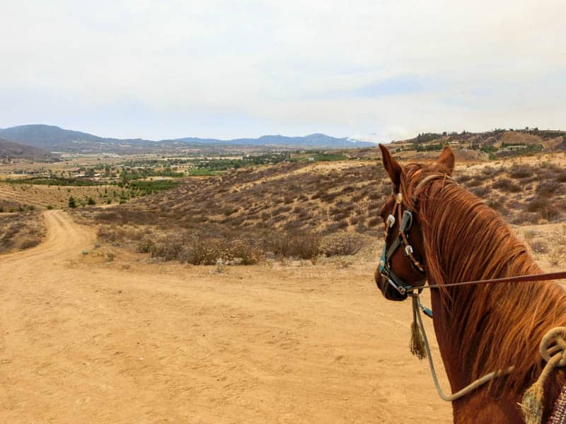 Horse Riding & Wine Tasting - Temecula
