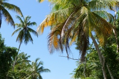 Reasons to visit Dominica, Caribbean
