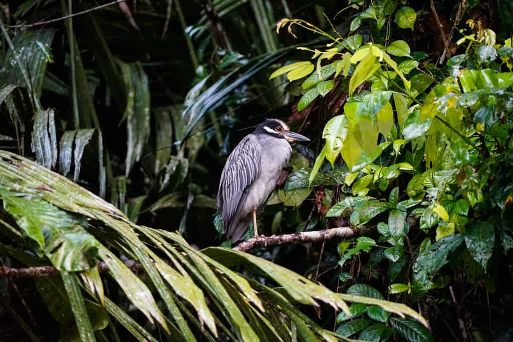 Costa Rica Wildlife - Intrepid Escape
