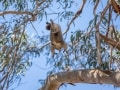 Greg Snell, Wildlife Caretaker - Intrepid Escape