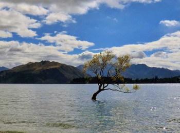 New Zealand Top 10
