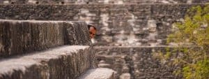 Discover the Mayan Ruins - Intrepid Escape