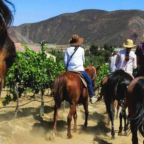 Horse Riding Wine Tasting Temecula