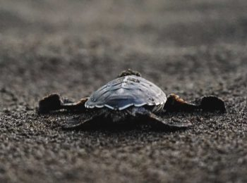 Watching Baby Sea Turtles in Tortuguero, Costa Rica