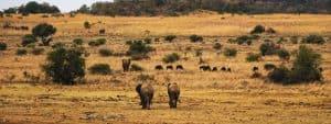 Pilanesburg National Park